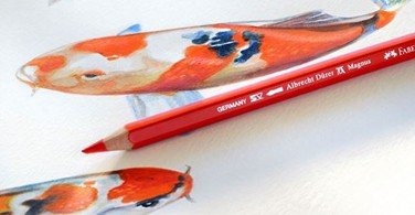 How to colour Koi Fish with Albrecht Dürer Magnus